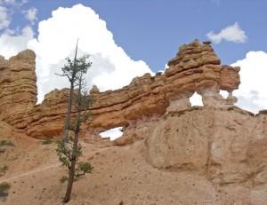 Mossy Cave Windows