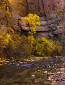 Zions NP Fall Colors