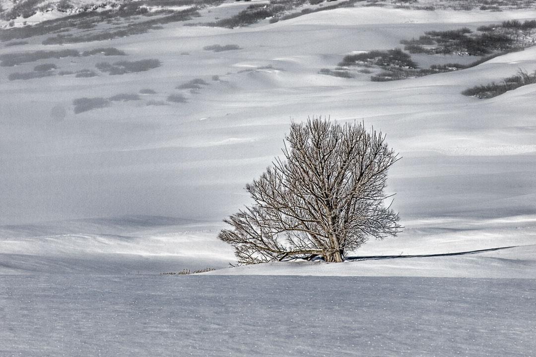 Midway Winter Tree