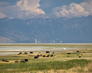 Salt Lake City with Antelope Island Buffalo