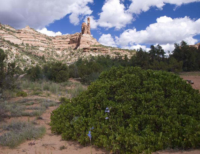 Arch Canyon #2