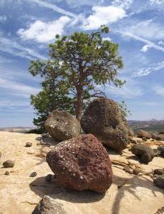 Boulders & Tree