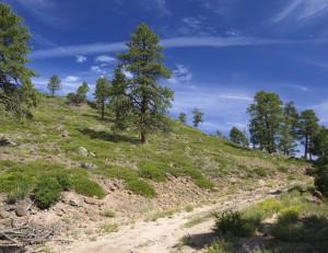 Dry Bench Trail