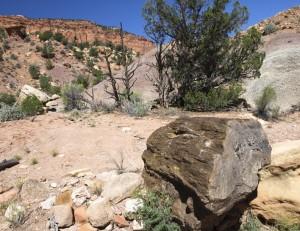 Petrified Log In Oak Creek