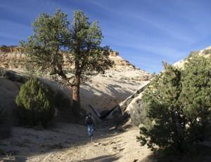 Cat Canyon Dam
