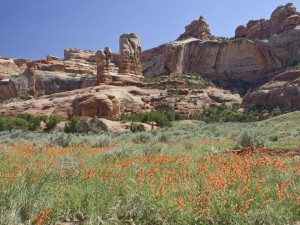 Trail Canyon