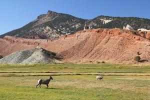 Mountain Sheep In Sheep Creek Canyon