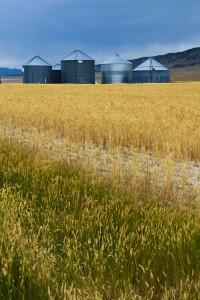 Curlew Valley Grain & Silos