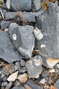 Deweyville Fossils