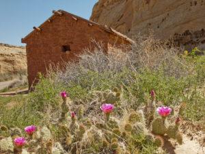 Middle Desert